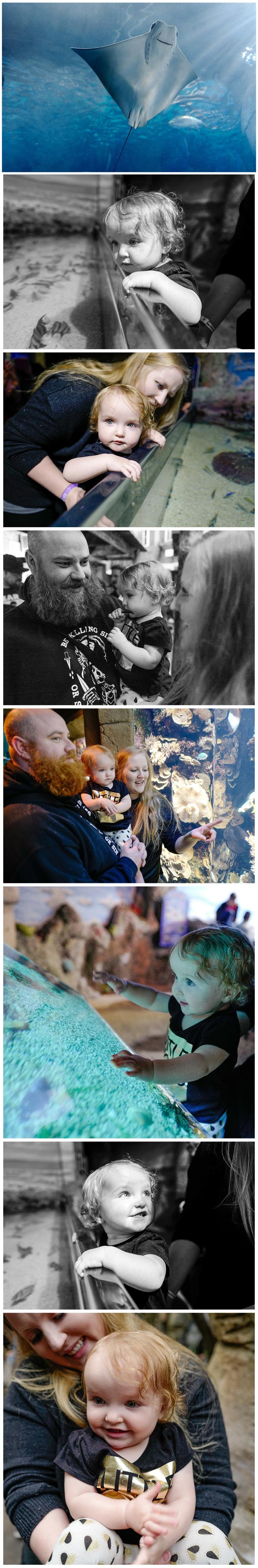 Adeline-first-visit-to-the-aquarium-2